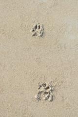 Dog paw print sand background texture