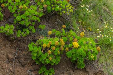 pflanzen auf einem berg