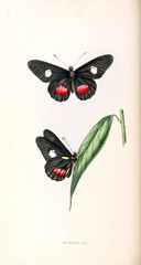 Illustration of a butterfly.