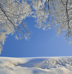 Frame from birch trees branches with hoarfrost covered