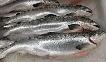 Fische, Forellen auf Eis