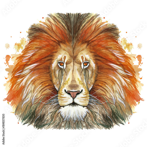 Watercolor drawing of an animal mammal animal predator of a red lion, red mane, lion-king of beasts, portrait of greatness, strength, kingdom, india, in front of a white background