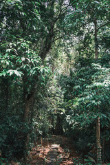 Bako Nationalpark in Malaysia auf Borneo