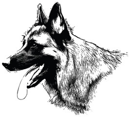 German Shepherd Illustration  on white background