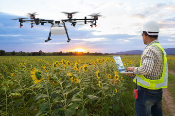 .Technician farmer use wifi computer control agriculture drone on the sunflower field, Smart farm concept
