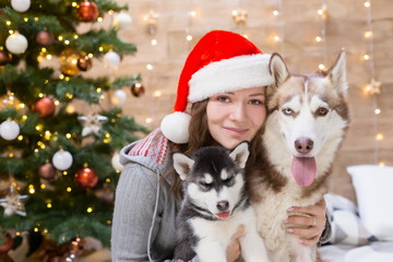 Woman, dog and puppy husky, Christmas tree, hat