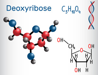 Deoxyribose molecule, it is a monosaccharide (deoxy sugar), it forms part of the backbone of DNA. Structural chemical formula and molecule model