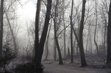 Misty Forest on a Cold Silent Morning