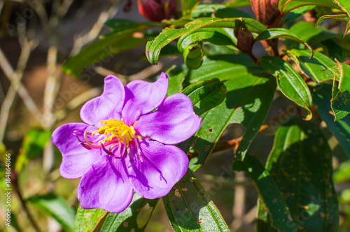 Purple flower with yellow center stock photo and royalty free purple flower with yellow center mightylinksfo