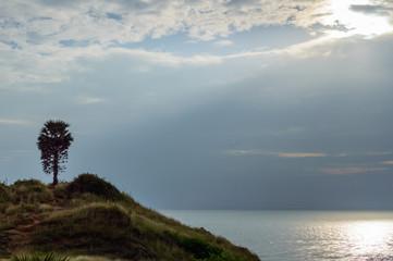 Single palm tree on sunrise with colorful twilight sky on the mountain