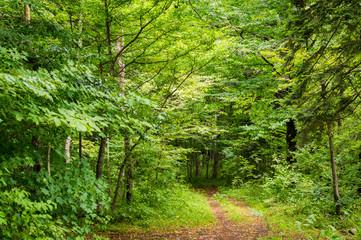 Magic forest path.