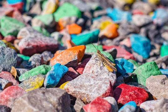 grasshopper on colored stones under the summer sunlight in the background insect multicolor wallpaper