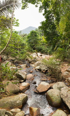 Vertical panoramic landscape with a tropical forest and a mountain stream in the park Ya Nuo Da in China