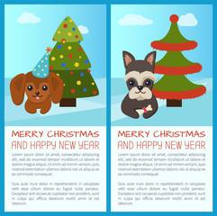 Merry Christmas Pine Tree Set Vector Illustration