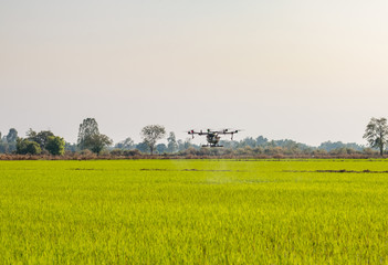 Agriculture drone operation rice field background