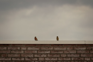 Birds on roof being together watching the day go by