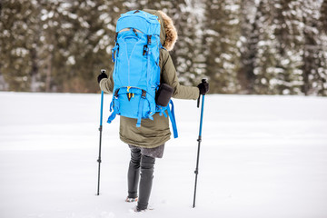 Woman hiking with backpack and tracking sticks at the snowy mountains with fir forest on the background