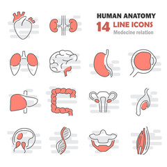 Human anatomy line icons set