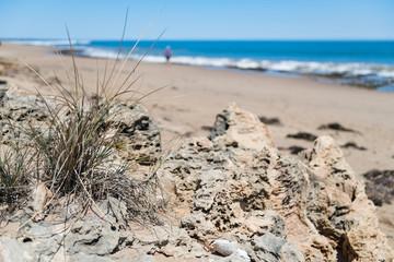 vertrocknete Vegetation auf Felsgestein mit unscharfem Strand und Meer im Hintergrund