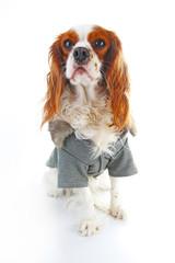 Dog coat. Puppy wearing winter coat. Dog Coat Jacket Pet Supplies Clothes Winter Apparel Clothing Puppy Costume. Elegant dog coat on isolated white studio photo. Cute.