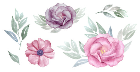 Vintage pink and purple flowers watercolour set. Rose and anemone blossom. greeting, invitation, wedding, birthday card. Botanical illustration. Green leaves. Design elements