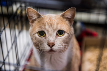 Very sad cat portrait with big eyes in cage waiting for adoption