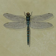 Dragonfly hand-drawn illustration on embossed background