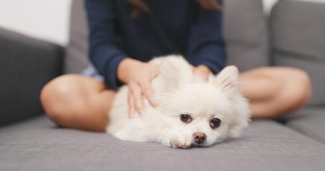 Woman massaging on her Pomeranian dog on sofa