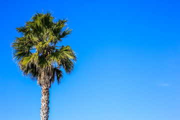 One palm tree with negative space. Sunny vivid color image for vacation journey or tourism company.