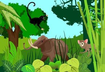 Jungle elephant, monkey on tree top, tarsier, jungle background, wildlife theme, vector.