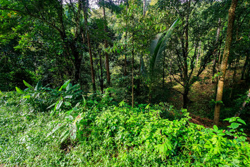 A tropical forest in the morning.