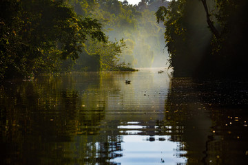 Surrounded by Rainforest in Early morning on Kinabatangan River in Sabah Malaysia