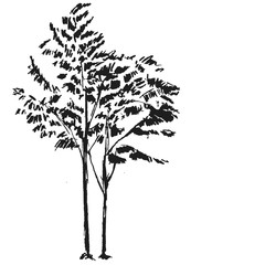Hand drawn black tree isolated on white background. Branches of small plant on vector illustration. Simple gray sketch.
