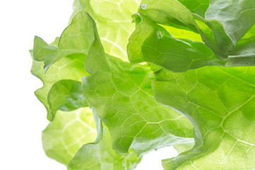 Fresh Lettuce one leaf isolated on white background. lose-up