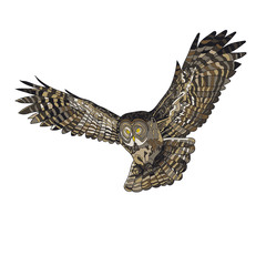 Vector illustration, an image of a flying owl. Color illustration.