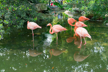 flamingos on lake in a park