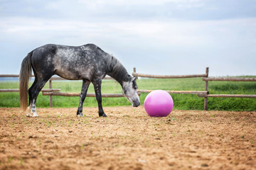 Horse playing with a big pink ball