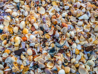 Sea Shells at the Beach
