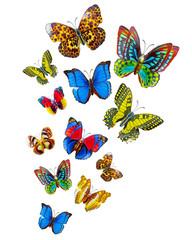 raccolta belle farfalle