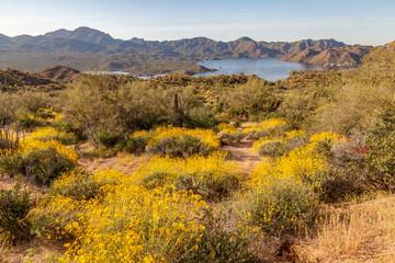 Scenic Arizona Desert Landscape in Spring