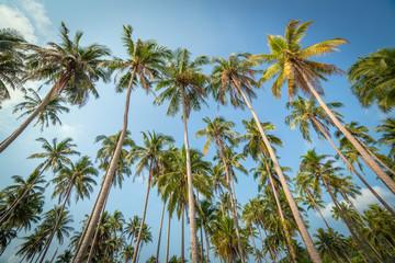 Palm trees against blue sky on Koh Kood island in Thailand