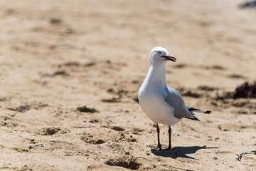 neugierige Möwe am Strand in der rechten Bildhälfte
