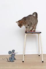 chat regardant un dessin de souris
