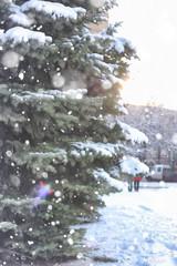 winter fir tree snow