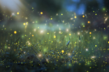 Abstract and magical image of Firefly flying in the night forest. Fairy tale concept. Fotoväggar