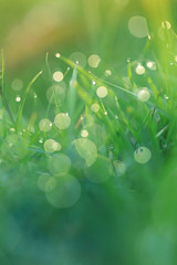 bright spring grass background. green grass with water drops at dawn background