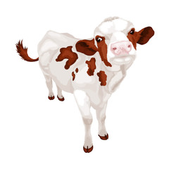Little white cow with red spots. Vector illustration