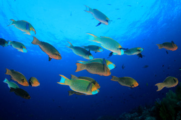 Coral and fish on underwater reef