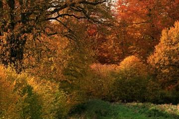 Herbstfarben am Knick, Goldener Oktober mit leuchtend gelbem Laub