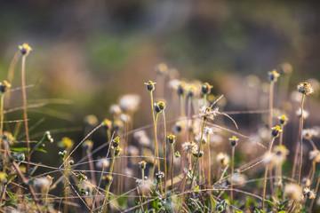 Grass flower and sunshine